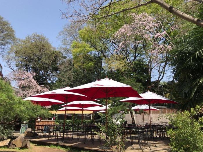 1300坪の敷地内には木立も多く、神楽坂へ数分の距離とは思えない静けさ。食後のお散歩も◎ 店に隣接して中庭にテラス席があります。