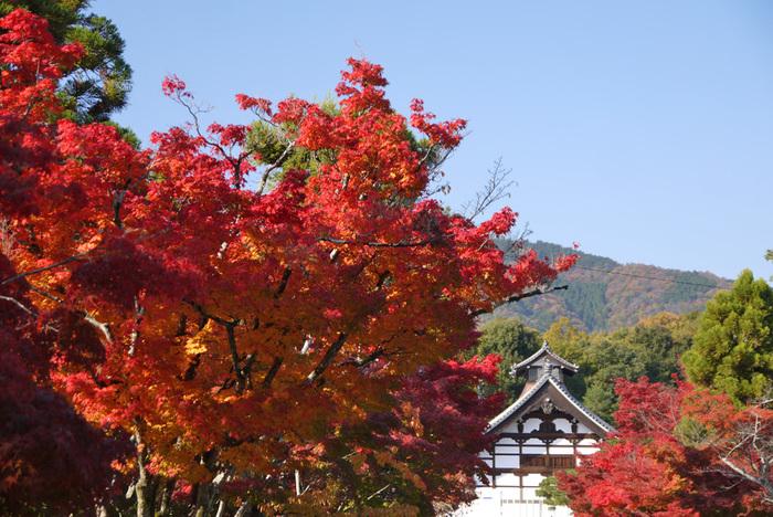 『古都京都の文化財』のひとつとして、世界遺産に登録されている「天龍寺」。なんといっても、庭園が美しく、前庭と方丈裏庭が特別名勝に指定されています。そのほか、八方にらみの龍の雲龍図も有名ですよね。