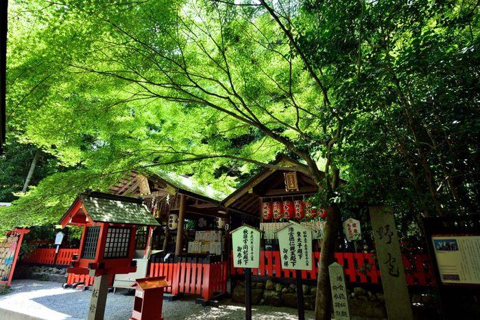 竹林の小径まで足を運んだら、源氏物語にも登場する野宮神社に訪れるのもお忘れなく。えんむすびの神様としても知られていますので、ぜひお参りしてみてくださいね。