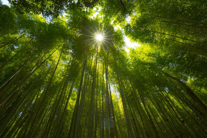 竹林に囲まれた日本独特の景観が、海外から訪れる観光客にも人気の「竹林の小径」。道の両側には孟宗竹などが道の両側に並び、美しい緑のトンネルを作り出しています。サラサラと揺れる竹林の音を感じながら、ゆっくりと歩いてみましょう。