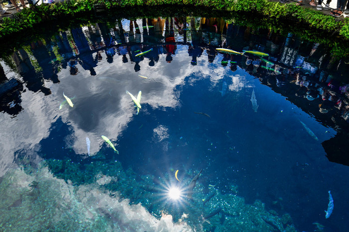 ここには、国の天然記念物に指定された美しい湧泉が8つあります。富士山の雪解け水が、20年かけてゆっくりろ過され、この澄んだ水が作られているんだそう。水深4メートルもあるのに、池を泳ぐ鯉や、底の小石までくっきりと見えるほど透明な水。時間を忘れて思わずうっとりしてしまいますね。