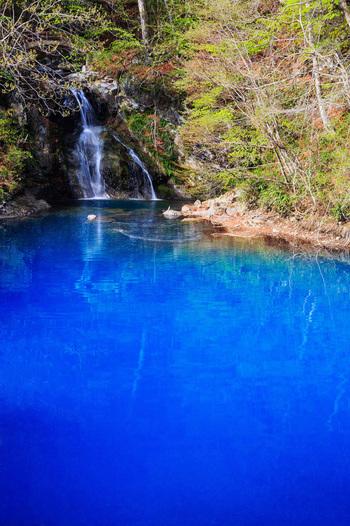 四万温泉の入り口付近にある「桃太郎の滝」。なぜこの名がつけられているのかは分からないそうですが、真っ青な湖面に流れ落ちる様子がとてもキレイ。真冬は凍結することもあるので、氷と青のコントラストも必見です。
