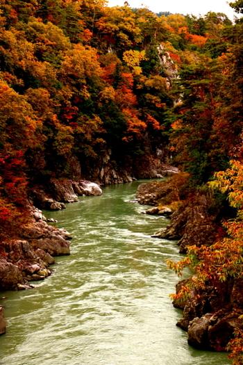 天龍峡の紅葉は、11月中旬ごろまでが見頃となっていますよ。  このあたりは、舟から紅葉狩りを楽しめる「天竜ライン下り」もありますので、あわせてチェックしてみてくださいね。