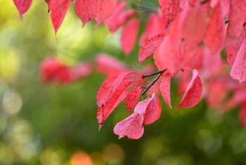 いよいよ紅葉も美しくなり秋から寒い冬本番へ向けての冬支度に差し掛かってきました。11月は師走も近づくため、なんだか慌ただしい毎日を送っている方も多いのでは?