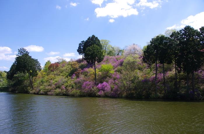 春にはミツバツツジ、夏にはハスが美しく咲きます。本堂の天井には、96面の花卉図が描かれています。