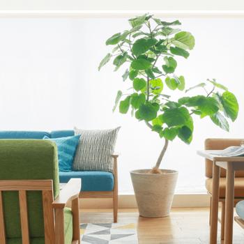 また、観葉植物はインテリアをお洒落に演出してくれるアイテムのひとつでもあります。 みなさんも、お気に入りの植物で、お洒落感と癒しを取り入れたインテリアを楽しんでみませんか♪