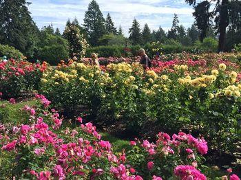 正式名称は国際バラ試験園(International Rose Test Garden )ですが、「ローズガーデン」として親しまれています。  バラのコレクションは約一万株。心も薔薇色に染まる、心豊かなひと時が過ごせる公園です。