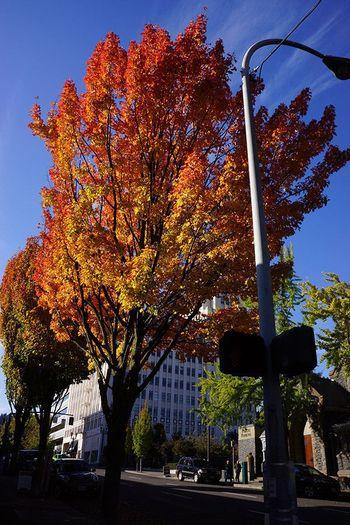 ポートランドの緯度は、日本の札幌と同じくらいのところにあります。地中海性気候に属する地域なので、日本より温暖で、冬も日本ほど厳しくなく、夏も湿気が少なくカラッとした過ごしやすいのが特徴です。  しかし、ポートランドは降水量が多いことでも有名。雨季の時期が「10月~5月にかけて」と非常に長く、1ヶ月毎日、雨が降るということもあります。なので気温に合った服装はもちろんですが、突然の雨に対応するべく「防水加工のあるレインジャケット」が一つあると便利です。また、夏は、日差しがかなり強いので、サングラスや日焼け止めもお忘れなく。  日本と同じで春・夏・秋・冬と四季があります。 旅行のベストシーズンは雨季の時期以外の夏のシーズン「6月~9月にかけて」となります(だいたい気温は25度)。