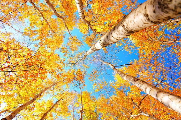 春の桜、夏のひまわり、秋の紅葉など、そのシーズンにしか見ることのできない自然は、どれも美しく、たくましいもの。道端に咲く小さな花や落ち葉のひとつだって同じです。「今だけの景色」と思って見れば、何の変哲もない風景にも特別感が生まれます。
