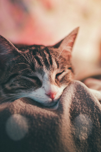 毛布にくるまったり、こたつやストーブに身を寄せたり。体をあたためる瞬間も、かけがえのないひととき。忙しさや悩みはいったん忘れて、リラックスして幸せを堪能してみては?