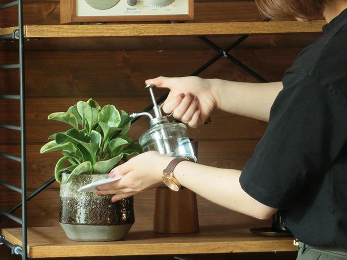 室内で育てる観葉植物の水やりは「土が乾いたらたっぷりと」が原則。 表面の土や、鉢底の土を触ってみると乾いている。一見すると、とても分かりやすいのですが、内側まで乾いているかは見た目には分かりにくいもの。割り箸などを土に挿してみて、抜いた時に湿っていたら中の土は湿っている証拠。割り箸が無い時には、指で表面の土を(植物に影響のない程度で)掘り返してみて、確認してみましょう。  基本的には、鉢の底から水が滴ってくるまで、たっぷりと水をあげましょう。水が鉢底まで滴ってきていれば、鉢全体に水が行きわたっている証拠です。さらっと水をあげただけだと、表面の方しか湿らず、肝心の根がある底の部分まで水が行きわたりません。水が足りないと、枯れる原因にもなるので注意しましょう。 また、植物の葉の表裏にも霧吹きを使って水を吹きかけましょう。これを「葉水」と呼び、乾燥が好きな害虫「ハダニ」の予防や、葉にハリが出るので、定期的に行うのがおすすめです。