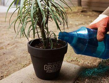 その後、水を使うので、一旦室内から外に出ます。 植物を左右に揺らしながら、鉢に水をかけます。こうすることで、根の隙間に土が入って行きます。かけた水は、鉢の下から流れて出てくるので、土の密度により、水をかけた所の表面の土が凹むので、手でならしましょう。