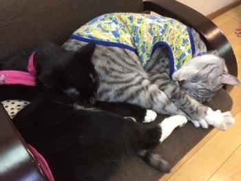 4匹の看板猫がいる中村屋旅館。写真はコタロウくんとヤマトくん。4匹ともとても人懐こく、お出迎えからお部屋訪問、お見送りまできめ細かいおもてにゃしをしてくれます♪