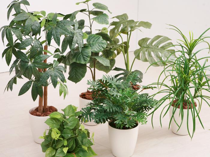 こちらは、消臭・抗菌・防汚・ホルムアルデヒド分解の効果もある光触媒仕様の人口の観葉植物。水よりの必要もなく、枯れてしまうこともない、環境に優しいお手軽なインテリアグリーンです。  本物と見間違うほど質の高い人工グリーンは、軽いのでお部屋間の移動も楽ちん!インテリアのアクセントとして、長く使っていけそうです。
