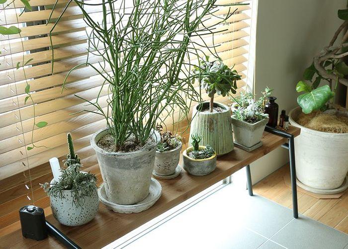 棚置きグリーンの場合は、小さいサイズをいくつかまとめてディスプレイするのがおすすめ! 床置きしたグリーンでインパクト感を出した分、棚置きでは、小さいサイズを置いた方が圧迫感もなく、お部屋に自然と 馴染みます。