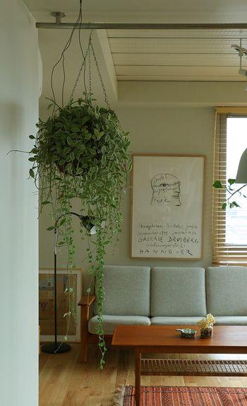吊り下げタイプのグリーンは、なんといっても、お部屋をお洒落に演出してくれる取り入れ方と言ってもいいでしょう。 アイビーやポトスをはじめとした、つる系の観葉植物を選びましょう!