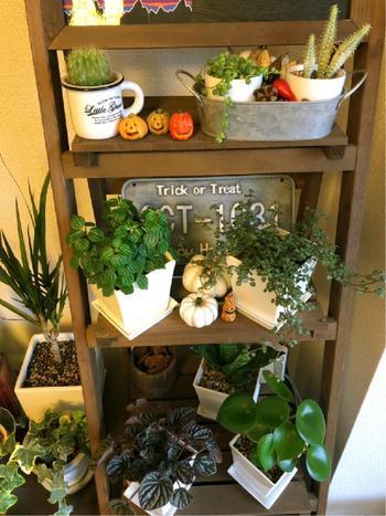 お気に入りの雑貨と組み合わせてグリーンをディスプレイしても素敵ですね。 春夏秋冬、イベントなどに合わせて、楽しくディスプレイしてみてはいかがでしょう…。