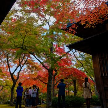 【「箱根美術館」の1500坪の広大な敷地には、展示施設の本館の他、国の登録記念物(名勝地)に登録されている「神仙郷」やミュージアムショップなどがある。中でも苔庭のある茶室「真和亭」は名高く、春夏秋冬季節折々に素晴らしい景色が広がる。】