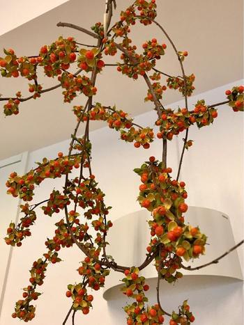 ツルウメモドキや野バラの実など、野にあった姿のまま楽しみたいときってありますよね。そんなときは、天井や壁に無造作に吊るして飾るのがおすすめ。空間に奥行き感や立体感が出て、お部屋の中でも自然を感じることができます。ツル性のものなら、くるりと巻いても素敵です。