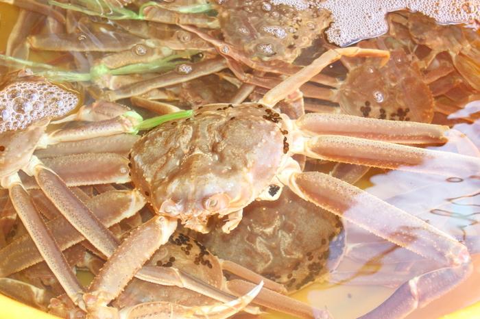 「松葉がに」とは、鳥取・島根・兵庫・京都の漁港で水揚げされるズワイガニのこと。松葉がにを含むズワイガニは、うまみが強く、身が柔らかいのが特徴で、かに味噌もおいしいです。漁期は、11月上旬~3月下旬。なお、ズワイガニのメスは、山陰では親がに、こっぺがになどと呼びます。