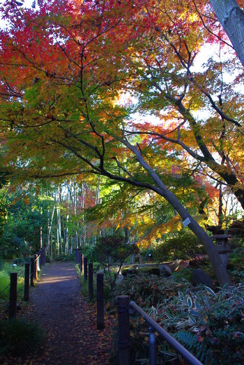 川の流れに沿ってゆったりと散策路を歩けば、彩り豊かな紅葉と森林浴を楽しめます。下流部まで行くと、昭和36年に建築された書院建物と日本庭園があるので、ぜひ足をのばしてみましょう。
