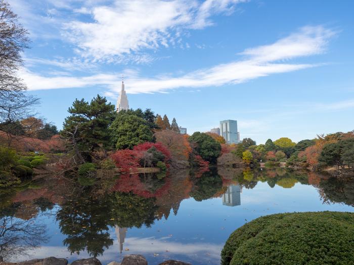 都会的な新宿のビル群と、すがすがしい紅葉とのコントラストを楽しむことができるのが新宿御苑のいいところです。土日は都民の憩いのスポットになっているので、人の少ない早い時間に行くのがおすすめですよ。
