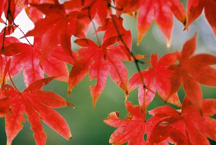 日本の美しい色【メイク編】肌になじむ大人カラーで作る秋冬メイク