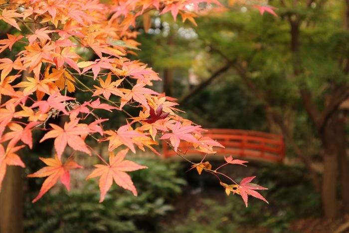 目の前に広がる一面の赤や黄色のじゅうたん…そんな雄大な紅葉の景色は、東京では見られないものだと思っていませんか?実は、わざわざ他県に行かなくても、豊かな紅葉を楽しめるスポットがあるんです。個性豊かなスポットばかりなので、それぞれの紅葉を見比べてみるのも楽しいですよ。