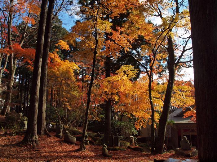 """【11月下旬の「長安寺」境内。長安寺は、静寂に包まれた山中の名刹。箱根屈指の紅葉の名所として知られ、11月中旬頃になると、山門から裏山一帯にかけて赤や黄に染まり、圧巻の景色となる。境内には、釈迦の弟子""""五百羅漢""""像が点在し、野外展示の美術館のようになっている。】"""