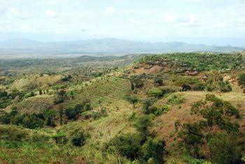 コーヒーの原産地であるエチオピアでは、現在でも野生のコーヒーが育っています。華やかな香りや心地の良い舌触りのエチオピアのコーヒーは、日本でも人気があります。