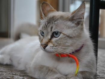 寝ることが大好きなススちゃん。小さな頃、煙突の中に入って遊ぶのが好きだったので、いつもススだらけになっていたことから命名されたのだそう。今はアイスブルーのお目めが可愛い美猫です。