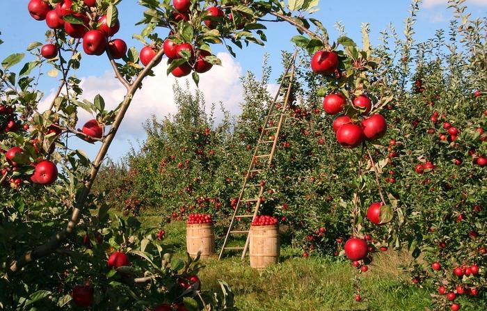 リンゴ農家である木村秋則さんは、妻・美栄子さんと一緒に青森でリンゴを栽培していました。年に十数回撒いていた農薬が原因で、体調を崩してしまった美栄子さん。妻の為に不可能と言われていたリンゴの無農薬栽培に挑むことを決意。何度も失敗し、借金が増えて極貧生活を強いられることになってしまい…。