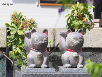 「石なで猫」をそっと撫でてお願いごとを。今戸神社の御祭神は、伊弉諾尊(いざなぎのみこと)と伊弉冉尊(いざなみのみこと)の男女の神さまであることから、縁結びにご利益があると言われています。