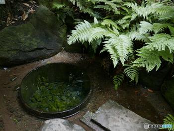 こちらは、安土桃山の武将、加藤清正が掘ったと言い伝えらる「清正井(きよまさのいど)」。信仰の対象として作られたものではありませんが、美しい湧き水には浄化作用があると、良縁を呼び込むパワースポットとして注目されています。