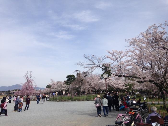 松のほか、ソメイヨシノなど桜の木が多く植樹されており特に春はお花見の観光客でにぎやかに。開放的な空間なので市街地より、のんびり桜を楽しめそうです。