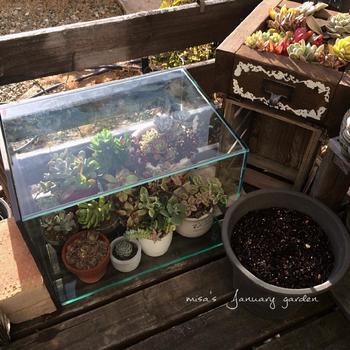 冬型の多肉植物だと、5℃以上の気温があれば屋外で育てられると言われていますが、それより寒い日には対策が必要です。 先ほどご紹介した防寒対策でもOK。小さなポットなら室内に入れてあげるのもいいでしょう。春秋型・夏型も冬の間は同様に防寒対策をしてあげましょう。