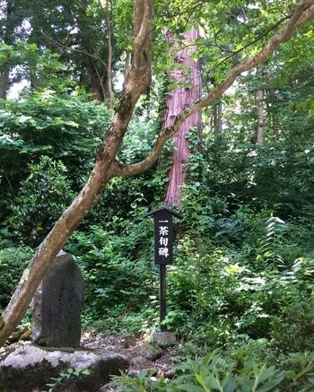 ちなみに、岩松院の庭には、俳人・小林一茶が「やせ蛙 負けるな一茶 是にあり」という句を詠んだとされる、『蛙合戦の池』がありますよ。  岩松院の入り口あたりに投句箱があるので、帰り際、一茶のように俳句を詠んでみてもいいですね。