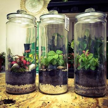 クッキージャーには形やサイズがさまざまあるので、植物を入れてみるのも面白いですね。盆栽を楽しむような感覚で限られた空間で小さなお庭を作ってみるのも素敵です。