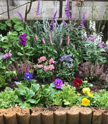 冬でも鮮やかなお花を楽しむことができたら、気分もアップして素敵な1日をスタートできそうです。こちらでは冬におすすすめの品種をご紹介します。