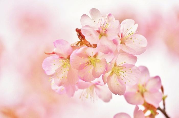 桜などはとくに入学式や卒業式など、春のイベントにはつきものの写真です。いろいろな構図でたくさん写真を撮っておくと、あとから面白い発見があるかもしれません。