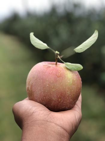 人生をかけてリンゴの無農薬栽培に挑んできた木村秋則さんの姿に胸を打たれます。子供から大人まで幅広い世代に観てほしい愛に溢れた感動作です。
