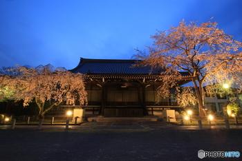 雪の庭だけでなく、桜やつつじも有名でライトアップされる時期も。街中から少し離れているため静かな雰囲気で、日々の喧騒から離れて時間を忘れにくるのもいいかもしれませんね。