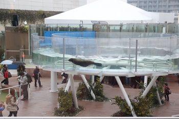 2011年、「天空のオアシス」というテーマを掲げてリニューアルオープンし、進化系水族館の先駆けともいえる水族館になりました。  例えば、こちらの「サンシャインアクアリング」(画像)では、このように、頭上でアシカがすいすい泳ぐ様子を楽しめます。まさに、進化系にふさわしい、水族館の常識を破るような屋外展示ですね。