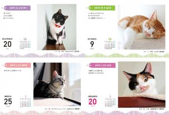 にゃんともかわいい猫がいっぱいで、毎日ほっこりすること間違いありません。猫好きさんにぜひ、おすすしたい贅沢にゃカレンダーです。
