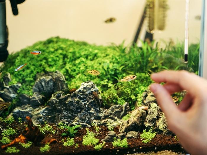 立石さんの自宅にあるアクアリウム。小さなフグのつぶらな瞳や、元気に泳ぐ美しい彩りの熱帯魚たちに癒されているそう。