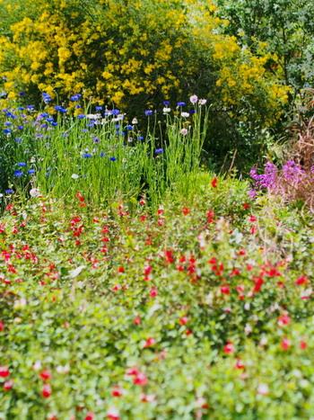 お庭のお花は、日々、季節のうつろいを感じさせてくれるもの。お水をあげるだけではなく、たまにはしっかりとお手入れしてあげましょう。きれいに咲いているお花をすこしだけ、お部屋用にカットしてみるのもおすすめです。