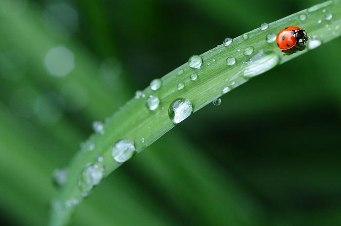 身の回りに溢れる自然の音に集中してみましょう。雨の音だっていつも同じではありません。窓を打つ雨音のささいな違いに気づけるようになったら、きっと心に余裕が生まれていることでしょう。