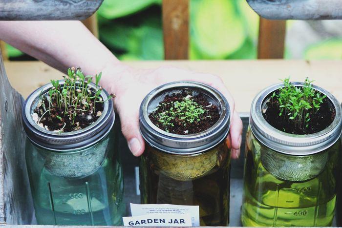 ガーデニングが趣味のあなたなら、ガラスジャーで簡単に植物を育ててみるのもいいですね。清潔なガラス製なのでお手入れも簡単です。