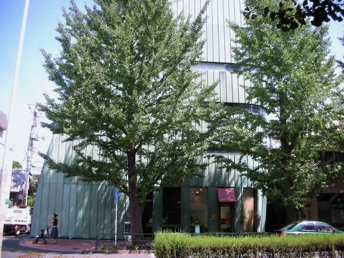南北線・白金台駅から歩いて7分ほど。外苑西通り(プラチナ通り)に面したビルの5階にあります。