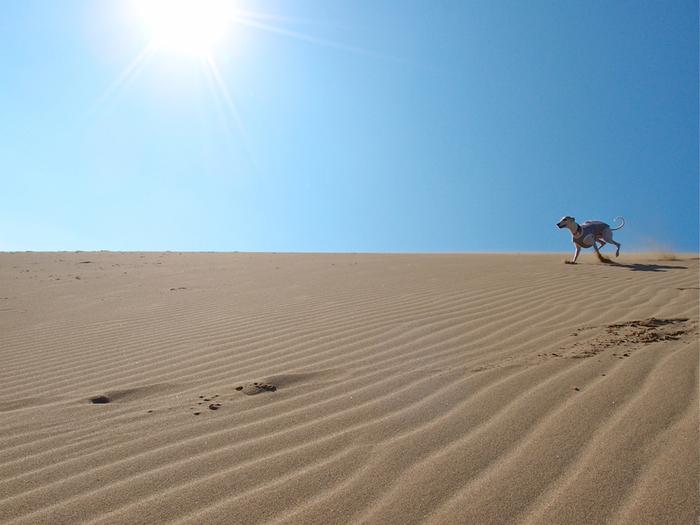 白砂が広がる砂丘と、その向こうに広がる日本海の美しさ…。 美しい景色の中で、らくだに乗ったり、パラグライダーに挑戦してみたり… 美しい景色に身をゆだねて、ゆっくり&のんびり過ごしたり… 鳥取砂丘は、一度は訪れたい日本有数の絶景スポットです。 美味しいグルメやお土産も楽しみながら、思い出の1ページを作ってみませんか♪